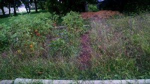 Our September Garden of Weedin'
